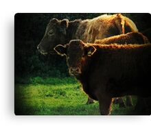 Rural scene, Denbury, Devon, UK Canvas Print