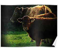 Rural scene, Denbury, Devon, UK Poster