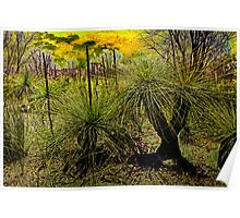 Grass Trees 2 Poster