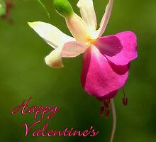 Fuschia Notecard- Valentine's Day by Diana Graves Photography