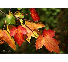 Autumn Maple Leaves ~ Nature's Work Photographic Print