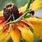 BLOMME in kleur | FLOWERS in colour