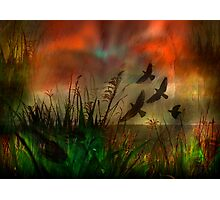 In the Meadow Photographic Print
