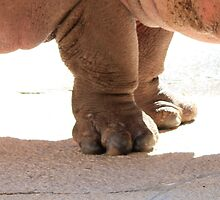 Feet Of A Happy Hippo by AuntDot