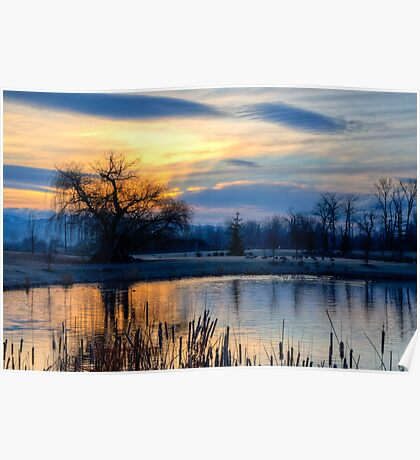 Old Willow at Sunrise Poster