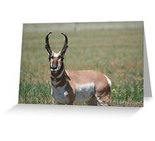 Antelope-One of God's Creations Greeting Card