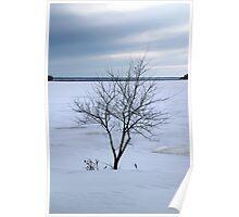 Tree on the Riverbank - Ottawa Ontario Poster