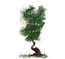 Little Zen Tree 143 Photographic Print
