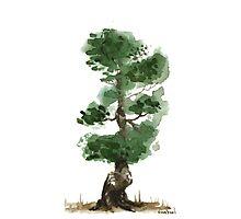 Little Zen Tree 144 Photographic Print