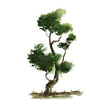 Little Zen Tree 145 Photographic Print