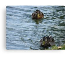 Ducks In a Row Canvas Print