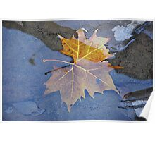 Sycamore Leaf Poster