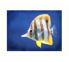 Beautiful salt water fish Art Print
