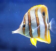 Beautiful salt water fish by Picturfine