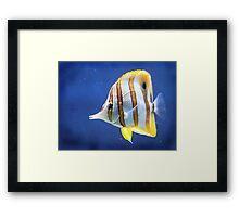 Beautiful salt water fish Framed Print