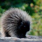 Porcupine by Diane Blastorah