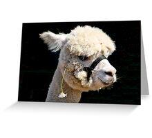 White Alpaca Greeting Card