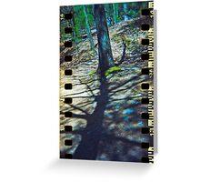 Walden Trees II - Concord, MA Greeting Card