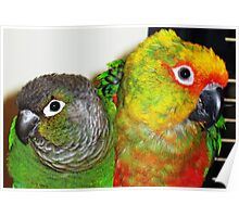 Two pets Poster