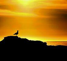 Laguna Beach by Stephen Burke