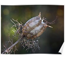 Nigella Seed Head Poster