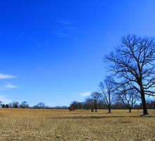 "Waveny Big Blue Sky by Christine ""Xine"" Segalas"
