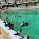 Pigeons taking off by João Almeida