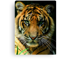 The Purrr...fect Cat Canvas Print