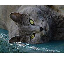 Lazy Cat Smokey! Photographic Print