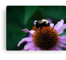 Bumble Bee on Cone Flower Canvas Print