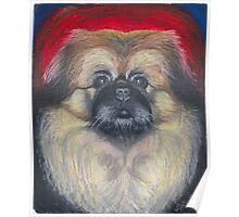 Fozy Bear, the Peke Poster