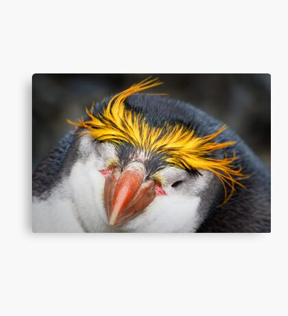 Royal Penguin Canvas Print