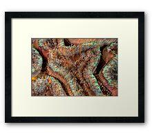 Reef Art - Lobophyllia Framed Print