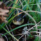Snake in the Grass by Diane Blastorah