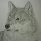 The Predator.......wolf portrait by Istvan froghunter