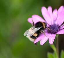 Bee STILL!!!  please? by Lanii  Douglas