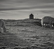 Grazing with the family by Chris Fletcher