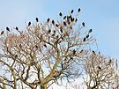 Starlings (Sturnus vulgaris) Against a Winter Sky by MotherNature