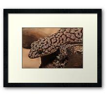 Marbled Gecko Framed Print