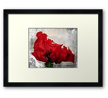 Red....Very Red! Framed Print
