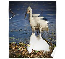 Snowy Egret Reflection Poster