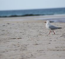 seagull2 by Mikayla House