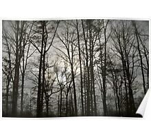 Trees Through the Forest Poster