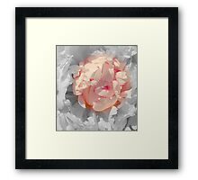 White And Pink Lace Framed Print
