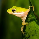 &quot;Hang Sixteen&quot; - an american green tree frog by John Hartung