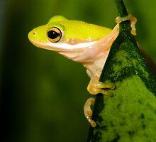 """Hang Sixteen"" - an american green tree frog by ArtThatSmiles"