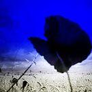 THE BLUE POPPY by leonie7