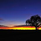 Tree Sunset  • Feature  • Northern California Lifestyle by Richard  Leon