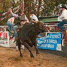 Bull Riding by Werner Padarin