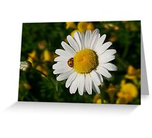 The Beetle and the Daisy Greeting Card